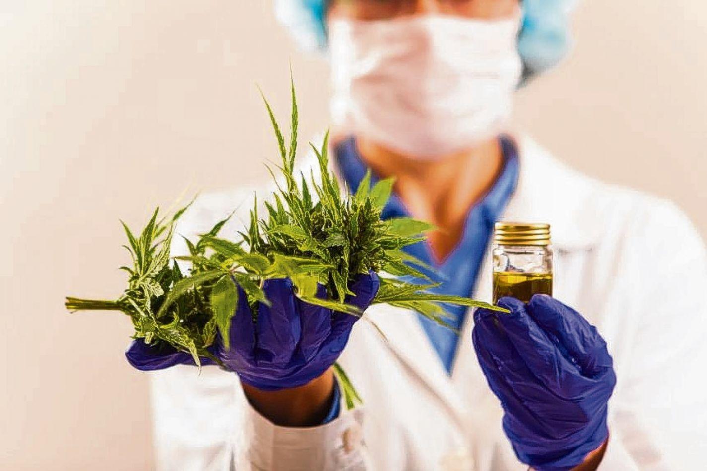 Cannabis es un género con tres especies de plantas de flores perteneciente a la familia Cannabaceae.