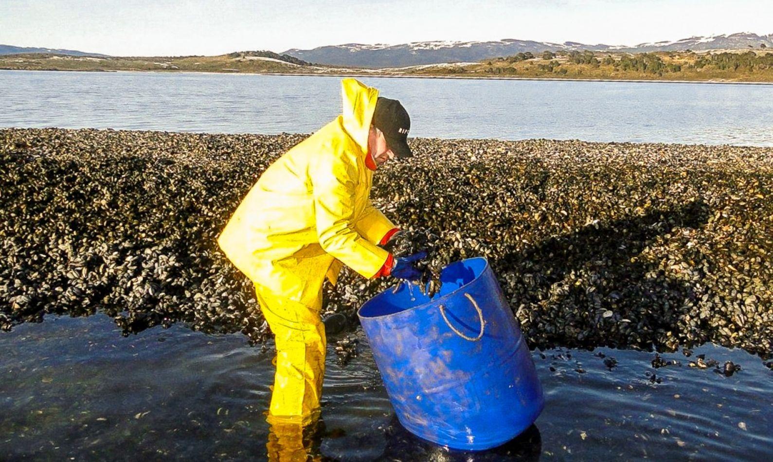 Retoman el programa de control de moluscos en Puerto Almanza
