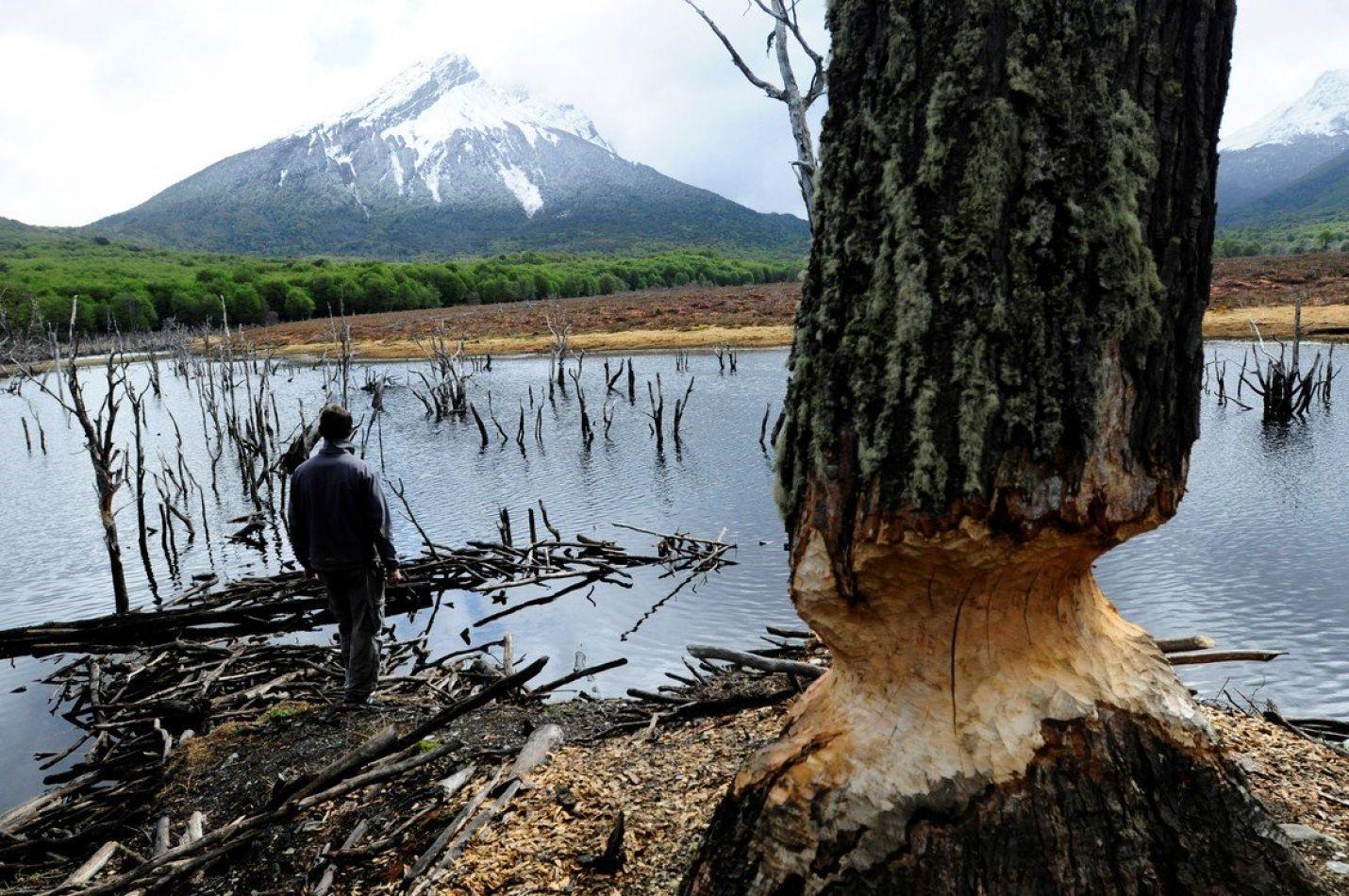 El INTA dio a conocer un informe sobre cómo manejar las plagas que afectan la biodiversidad.