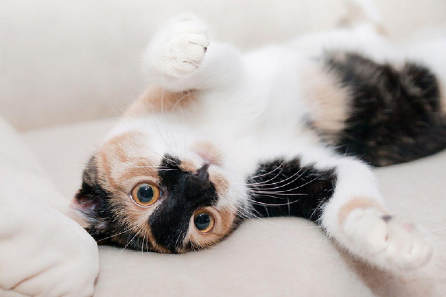 Es el Día Internacional del Gato