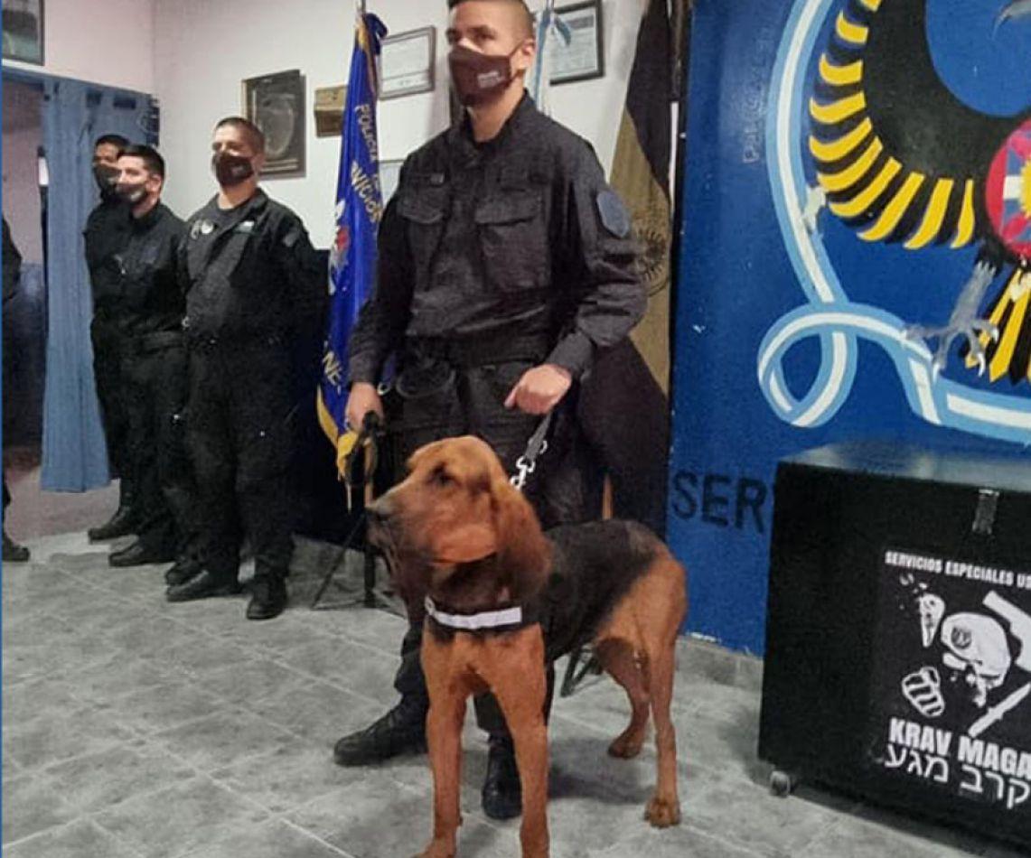 Berlín es un can que fue donado por la Policía de Comodoro Rivadavia.