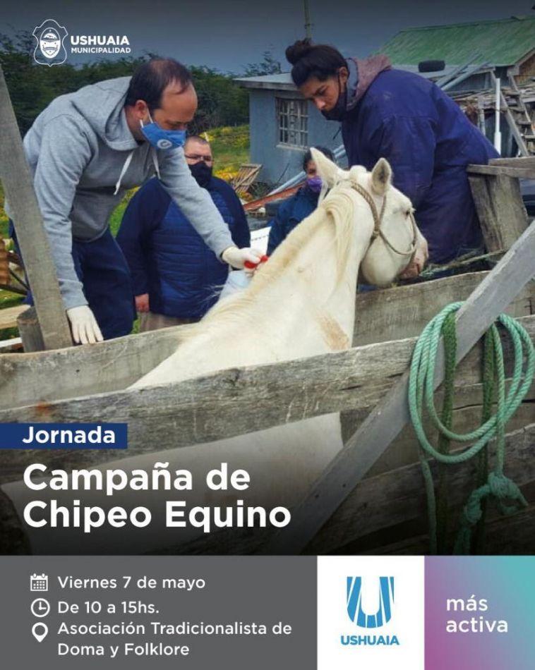 La omisión de la identificación de los equinos es pasible de multas que podrá aplicar el Estado municipal.