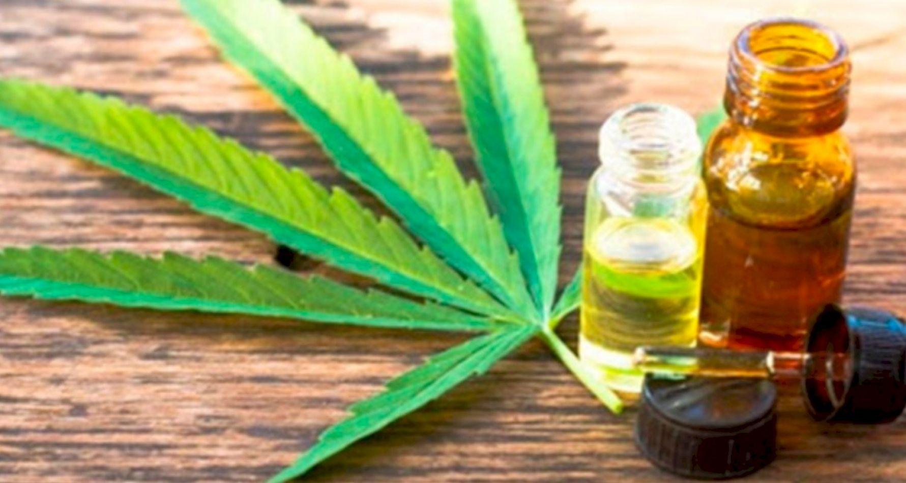 El Gobierno presentará un proyecto para el desarrollo de la industria del cannabis medicinal